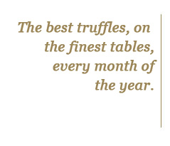 The best truffles on the finest tables every month of the year